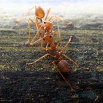 Semut / Ant